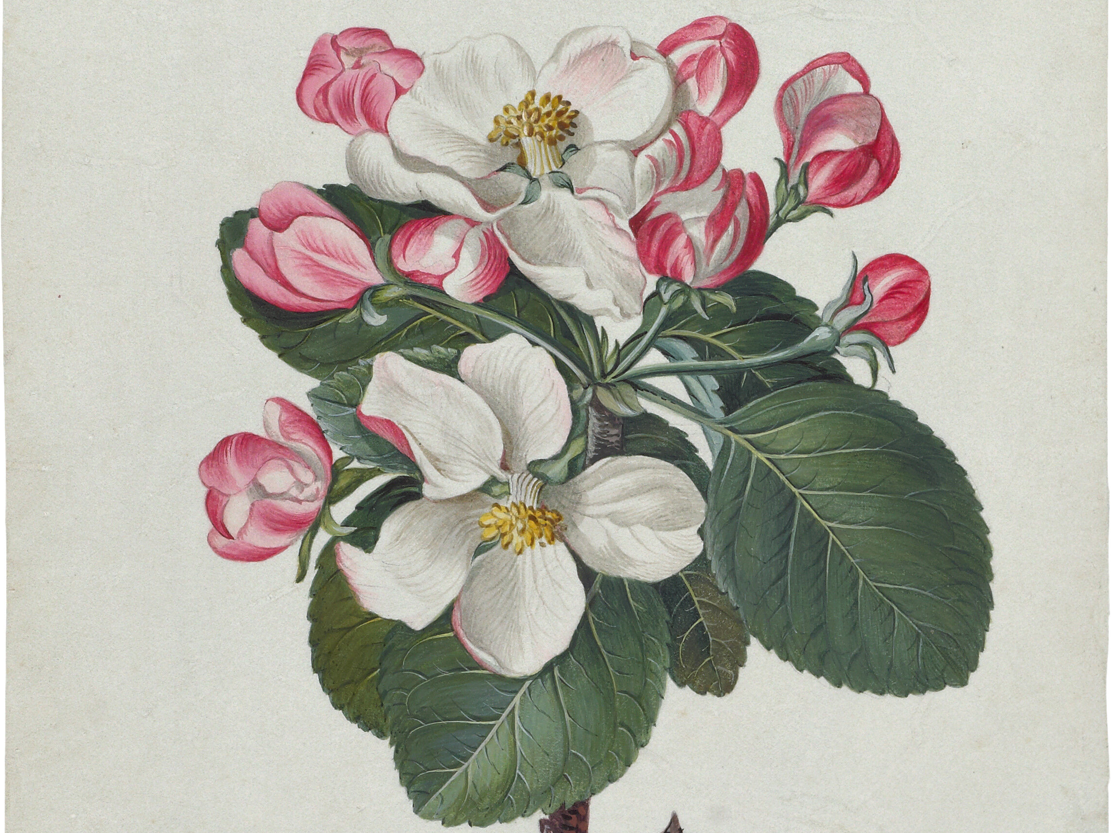 Botanical Artist in Residence Programs open to visual artists. Deadline to apply is July 15.